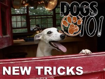 Dogs 101: New Tricks